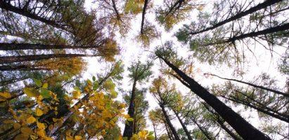 Biomassa: un'opportunità per il sistema energetico